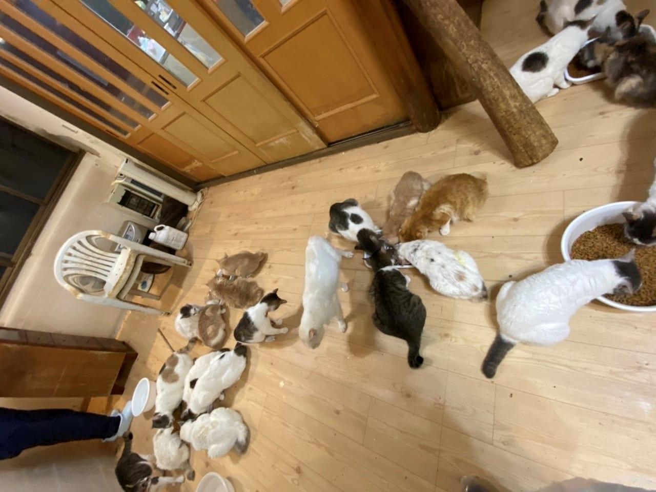 《猫の里親・保護主を緊急募集》野田市で50匹以上の多頭飼育崩壊が発生し、危機的状況です。どうか皆様の力を貸してください